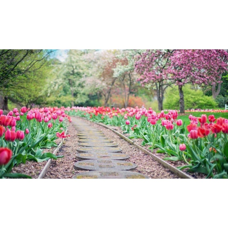 Flower-Lined Pathway
